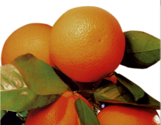 L'arancia del golfo di Taranto
