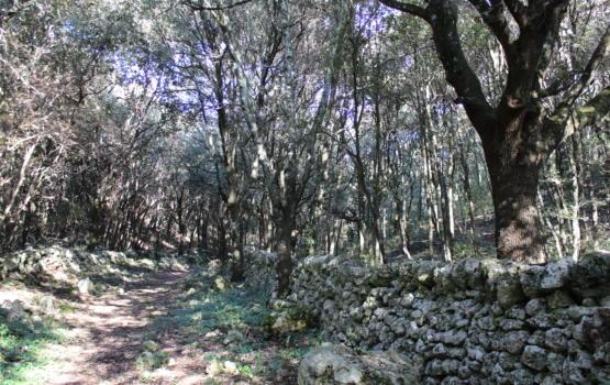 Bosco di Pilano